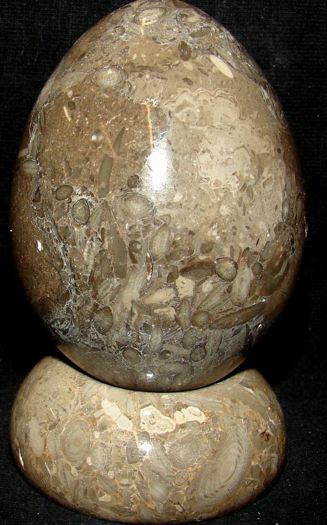 http://www.tumbled.com/fossilegg-34.jpg (582341 bytes)